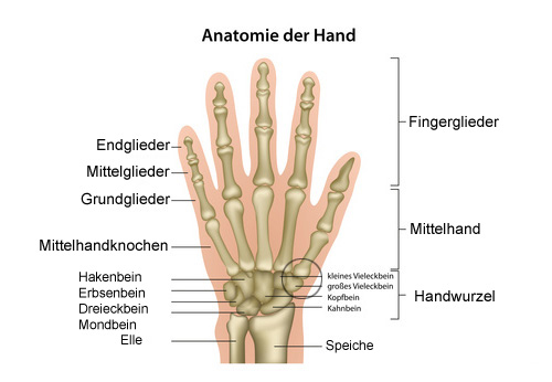 Arthrose der Fingergelenke