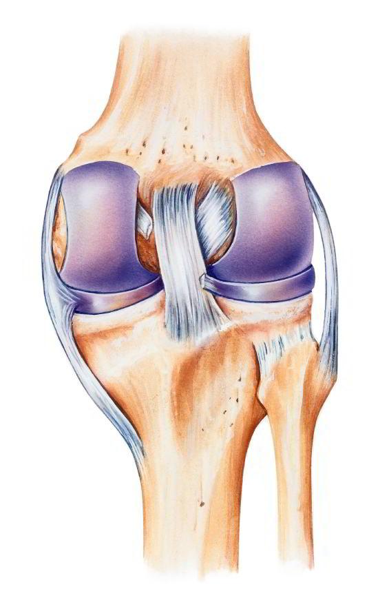 Riss oder Zerrung am Seitenband: Was dein Knie jetzt brauchst?