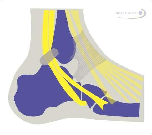 979bea5048f096 Die Peronealsehnen lenken den Fuß bei der Plantarflexion (vertikale auf und  ab Bewegung) und